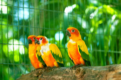Colourful parrot bird. Sitting on the perch Stock Image