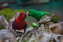 Colourful parrot bird. A cute colourful parrot bird Royalty Free Stock Images