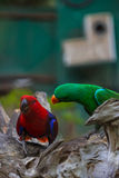 Colourful parrot bird. Cute colourful parrot bird in zoo Royalty Free Stock Image