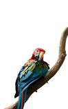 Colourful parrot bird  on the perch Stock Photo