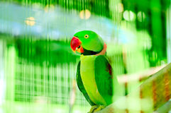 Colourful parrot bird sitting Royalty Free Stock Photography