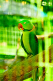 Colourful parrot bird sitting Royalty Free Stock Photo