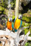 Colourful parrot bird sitting. On the perch Stock Photography