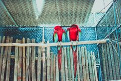 Colourful parrot bird sitting on the perch Stock Photography