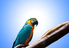 Colourful parrot bird sitting Stock Photo