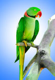 Colourful parrot bird sitting Royalty Free Stock Photos