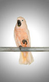 Colourful parrot bird sitting Stock Photography
