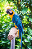 Colourful parrot bird sitting Royalty Free Stock Photos