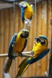 Colourful parrot bird Stock Photo