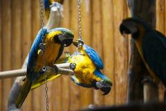 Colourful parrot bird Stock Photography