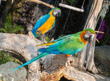 Colourful parrot bird sitting Stock Images