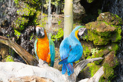 Colourful parrot bird sitting Royalty Free Stock Image