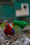 Colourful parrot bird Royalty Free Stock Photography