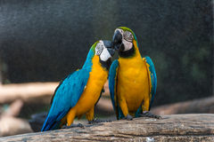 Colourful parrot bird. In the zoo Royalty Free Stock Photos