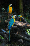 Colourful parrot bird. In the zoo Royalty Free Stock Images