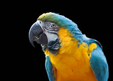 Colourful parrot isolated Royalty Free Stock Images