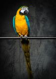 Colourful parrot on a perch Stock Photos
