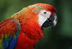 Birds seen in Kuala Lumpur Bird Park. Colourful Parrot seen in bird park in Kuala Lumpur, November 30, 2017 Royalty Free Stock Photography