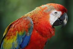 Birds seen in Kuala Lumpur Bird Park Royalty Free Stock Photography
