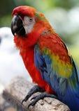 Birds seen in Kuala Lumpur Bird Park. Colourful Parrot seen in bird park in Kuala Lumpur, November 30, 2017 Stock Photo
