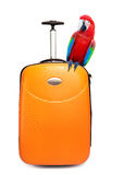 Colourful parrot sits on a suitcase for travel Stock Images