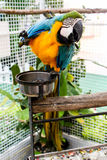 Colourful Parrot. Thailand in the zoo try to acting in front of camera Stock Photo