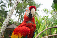 Colourful parrot in tropical park Royalty Free Stock Photo
