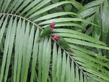Colourful parrots in Edward Youde Aviary, Hong Kong park. Central Hong Kong royalty free stock photos