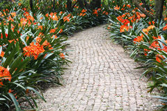 Colourful Pathway. Brick-laden paved pathway adorned with colourful green plants blooming with bright red flowers Royalty Free Stock Image