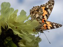 Butterfly against the sky stock image