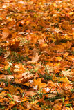 Colourful pile of leaves Royalty Free Stock Photos