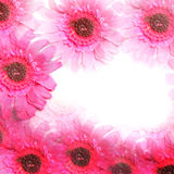 Colourful pink flower border. In square format with central white copyspace for your text or message stock photography