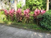 Colourful plants along a street in San Isidro, Lipa city, Philippines stock photos