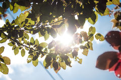 Colourful plum tree branches in the sunlight Stock Image