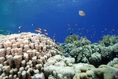 Colourful pristine coral reef Royalty Free Stock Photo
