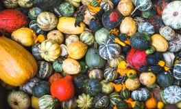 Pumpkins in a box stock photo