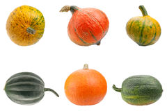 Colourful pumpkins isolated on white background. Stock Images