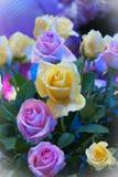 Colourful róża kwiat dla walentynki, przyjęcie, rocznica, decorati Obrazy Stock