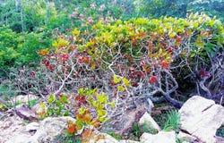 colourful raro dell'albero stupefacente della foresta Fotografia Stock