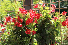 Colourful red summer flowers Stock Image