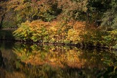 Colourful autumn trees reflecting in water. Colourful red and yellow autumn trees reflecting in water stock image