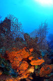 Colourful Reef Stock Photography