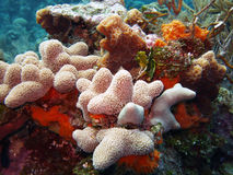 Colourful reef scene. A colourful Caribbean reef scene, featuring hard and soft corals Stock Photography