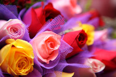 Colourful rose Royalty Free Stock Photography