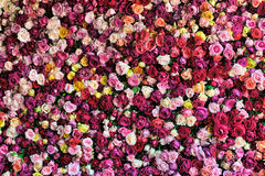 Colourful Rose Background Stock Photos