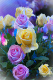 Colourful Rose Flower for Valentine, party, anniversary,decorati Stock Images