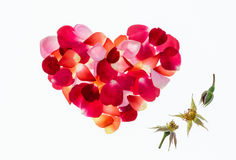 Colourful rose petals heart shape on white background Stock Photography
