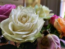 Colourful Roses Royalty Free Stock Photos
