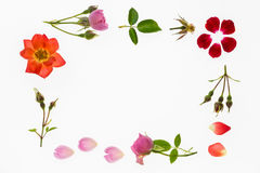 Colourful roses and petals frame Royalty Free Stock Photo