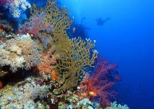 Colourful scena przy Habili Ali, St John rafy, Czerwony morze, Egipt zdjęcie stock